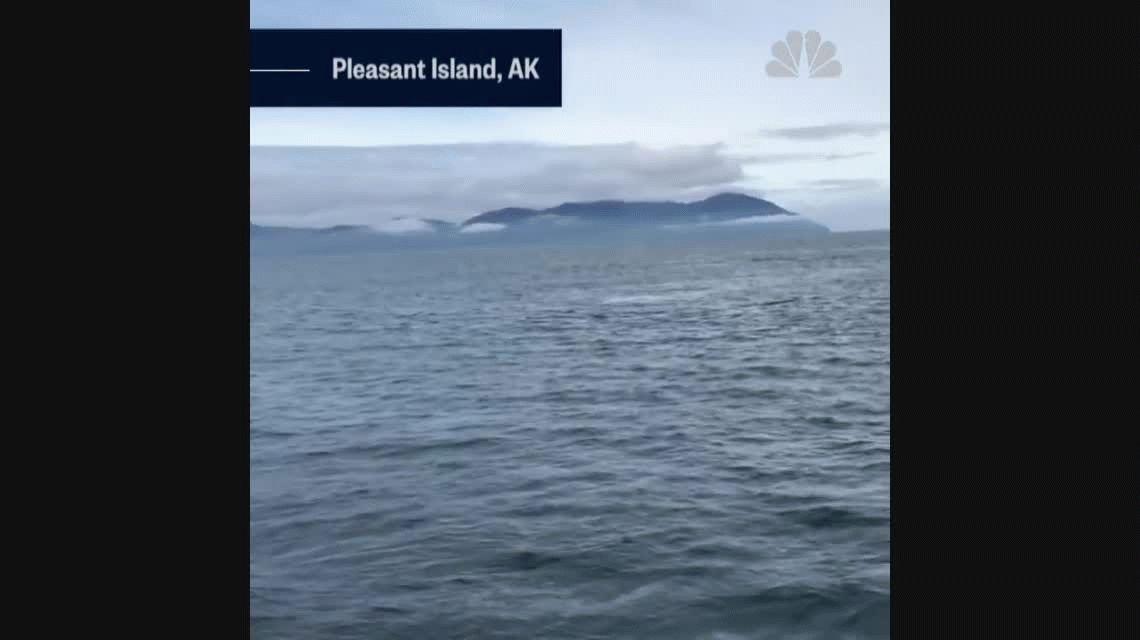 ¡En vivo y en directo! Una ballena se zambulló arriba de un barco de turistas