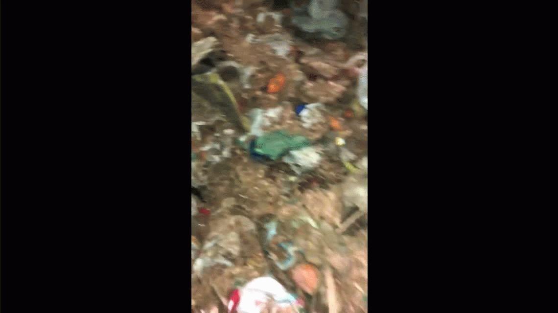 VIDEO: Un recolector le salvó la vida a una cachorrita que habían tirado a la basura