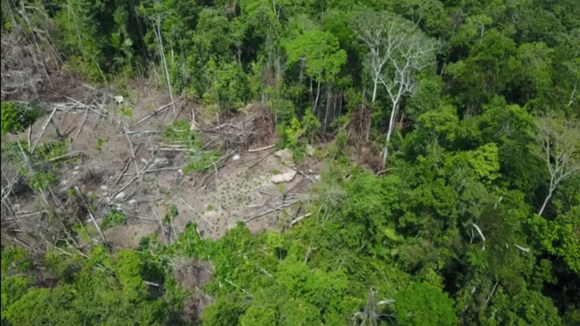 VIDEO: Descubren una tribu desconocida que estaba escondida en el Amazonas