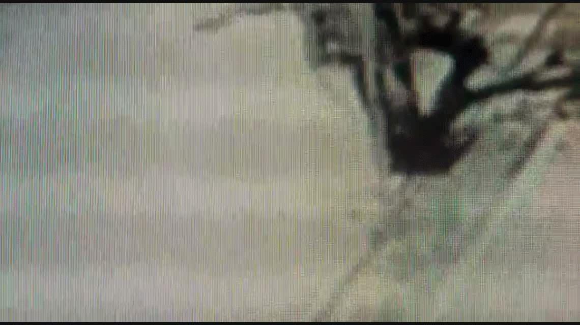 VIDEO: Una mujer se defendió a los golpes de un motochorro