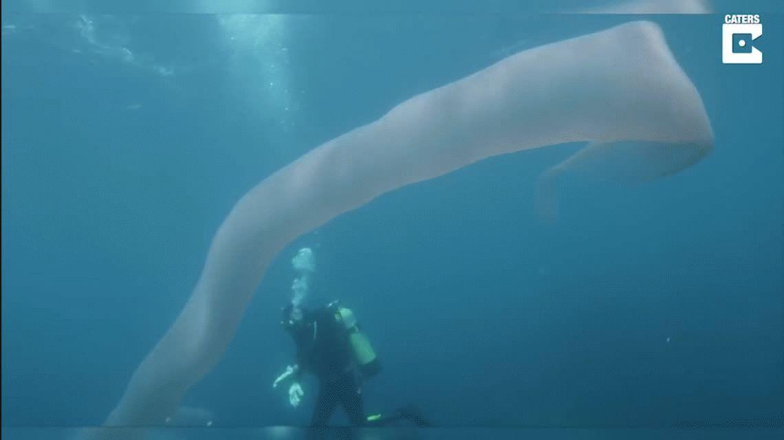 ¿Qué es esta extraña criatura que encontraron dos buzos en el mar?