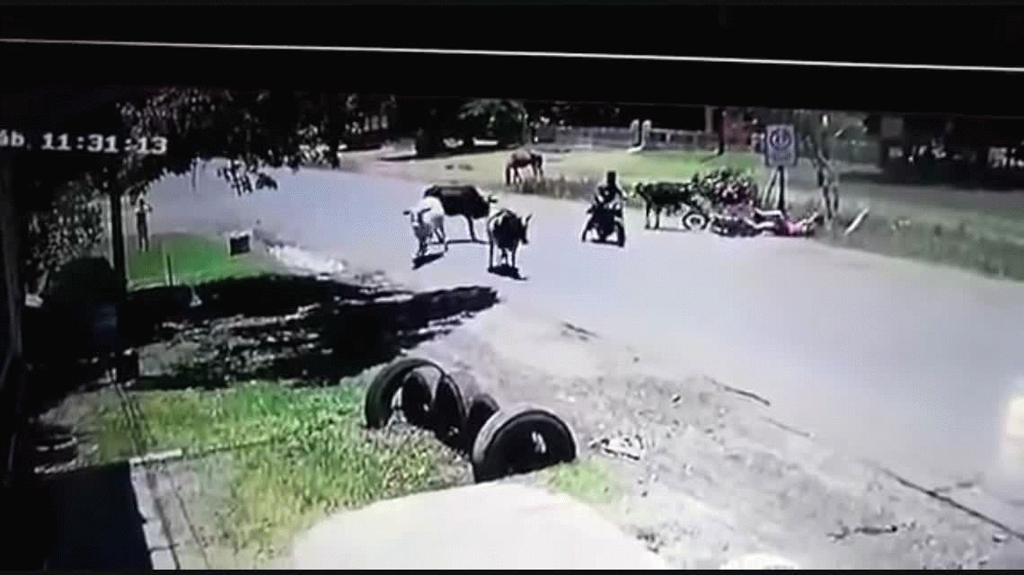 Paraguay: una vaca le pegó una patada voladora a una motoquera