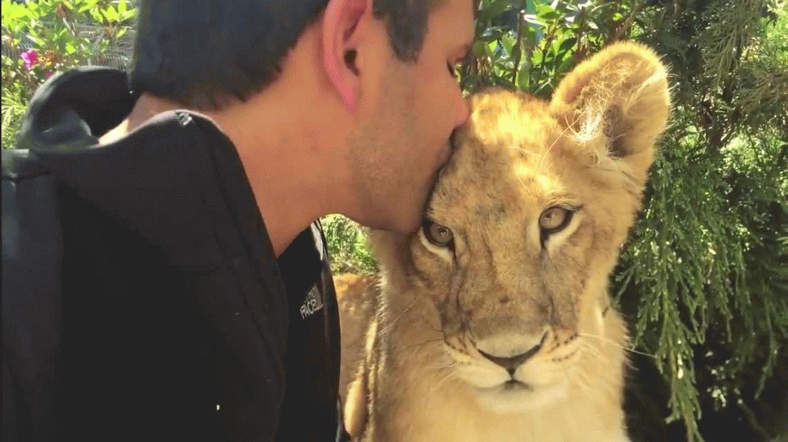 VIDEO: La reacción de una leona al reencontrarse con su cuidador después de años