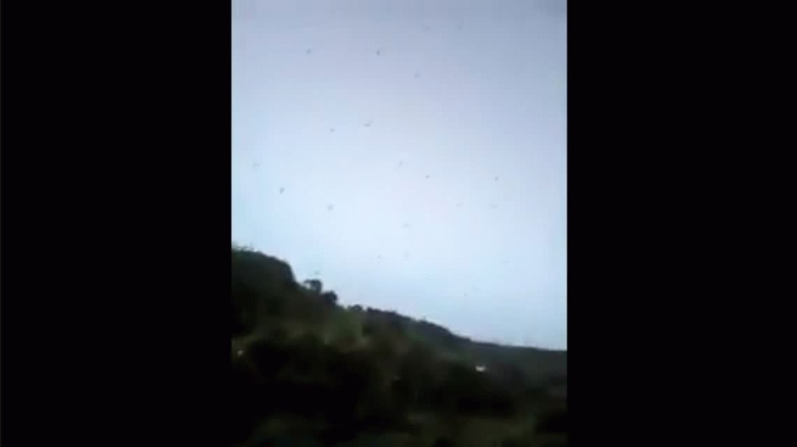 VIDEO: Una lluvia de arañas impresionó a todos en Brasil
