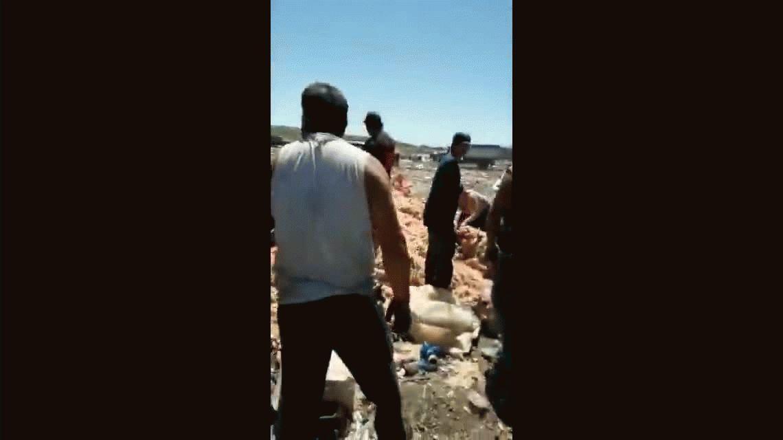 El drama de la pobreza en Mar del Plata: buscan pollos en mal estado en el basural