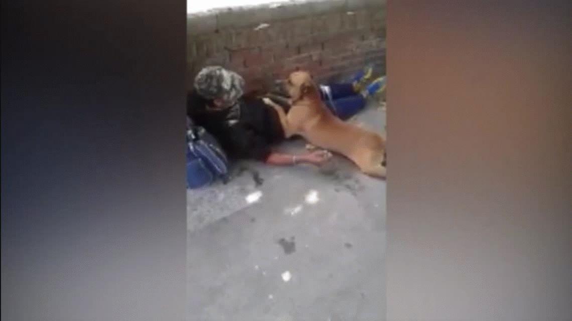 Conmovedor: se descompensó y su perro lo cuidó hasta que llegó la ambulancia