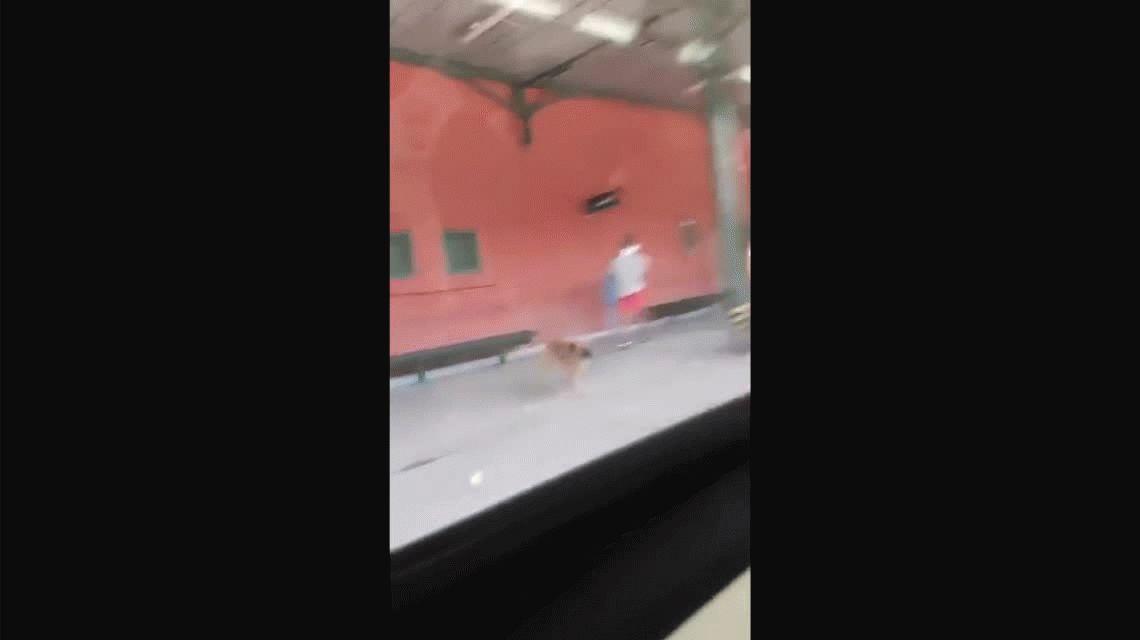Subió corriendo al tren Roca y abandonó a su perro en el andén