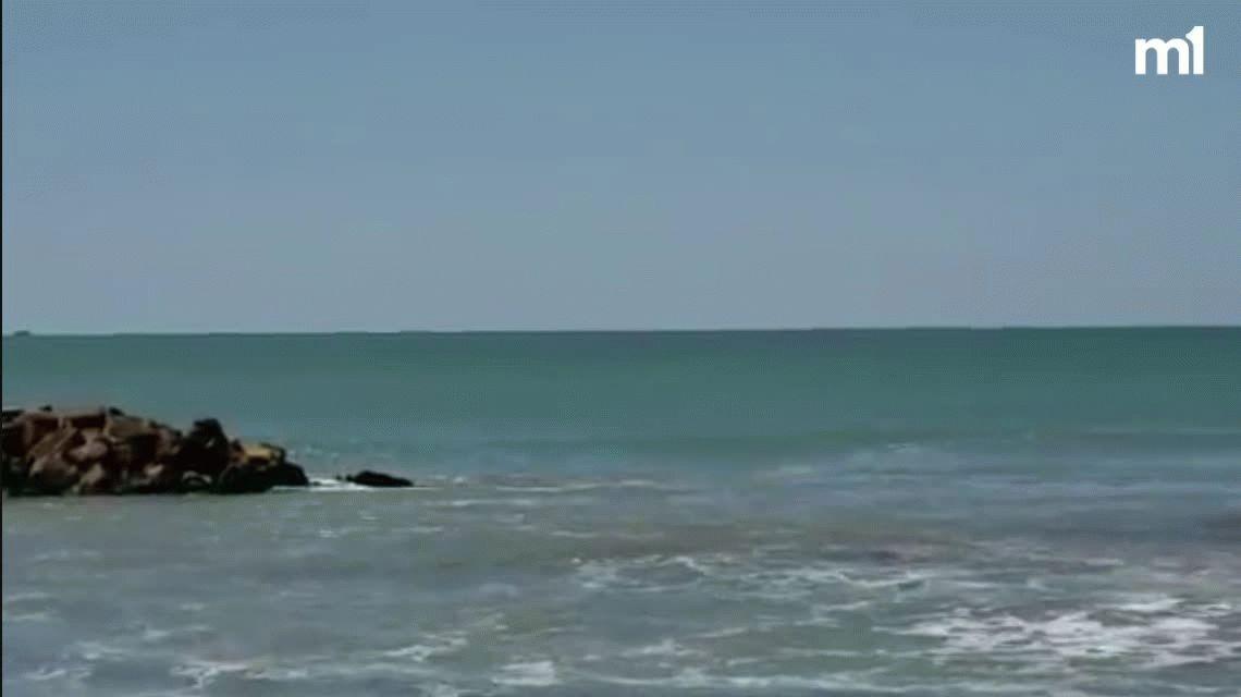 Alerta en Mar del Plata: aparecieron orcas en una de las playas más populares