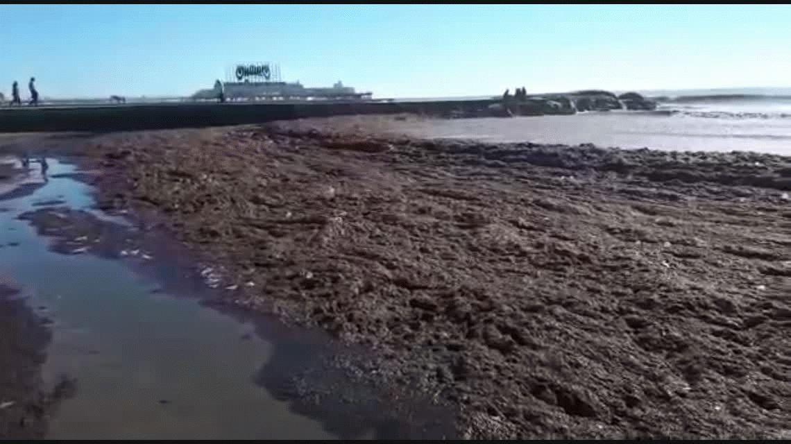 Como Miami o el Caribe: Mar del Plata se llenó de algas en el cierre del fin de semana largo
