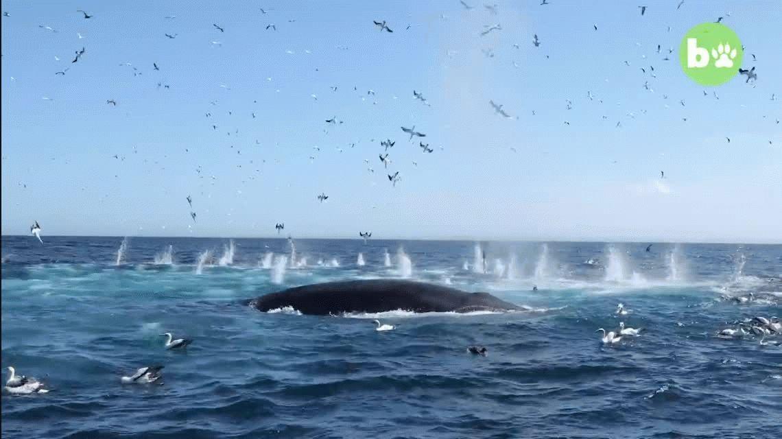 Sudáfrica: una ballena se tragó a un fotógrafo y después lo devolvió vivo