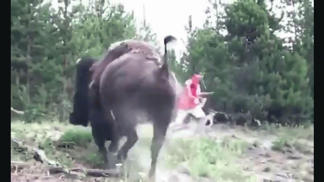 VIDEO: Una nena fue atacada por un bisonte en el Parque Nacional Yellowstone
