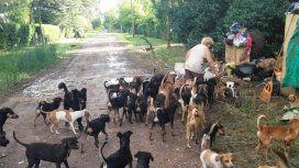 Rescataron a los 120 perros y sus dueñas recibirán ayuda psicológica