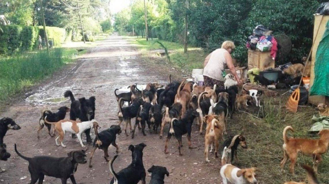 Rescataron a 120 perros de Berazategui y sus dueñas recibirán ayuda psicológica