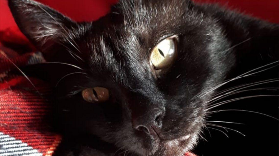 Su gato agonizaba y lo salvaron con aceite de cannabis: Ya lo estábamos velando