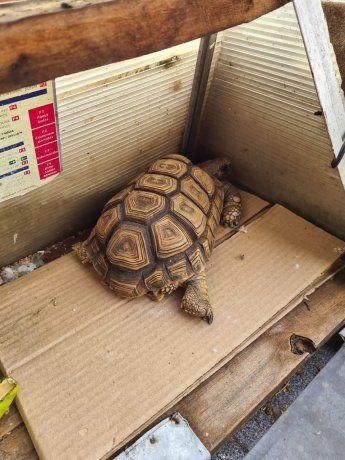 Rescatan animales de un criadero ilegal en la Ciudad