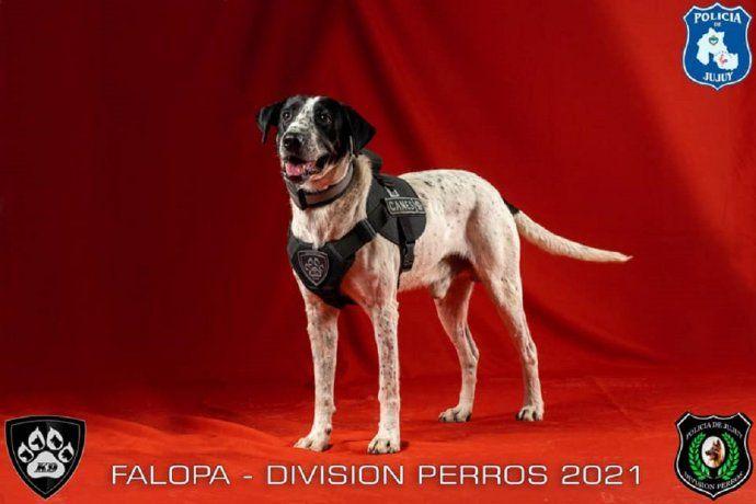 Jujuy presentó sus perros de policía: uno se llama Falopa