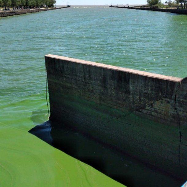Problemas en el suministro de agua por algas en el Río de la Plata - @ABSAOficial