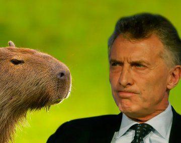 ¿Macri solidario con vecinos de Nordelta? Le molestan los carpinchos
