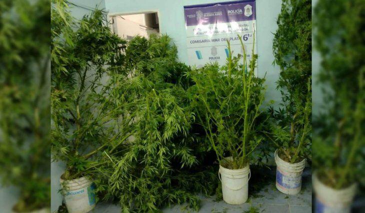 Mar del Plata: fueron a una casa por una explosión y se encontraron con una plantación de marihuana