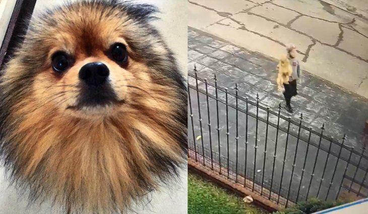 Robó un perro del jardín, quedó filmado y se niega a decir dónde está: una nena de siete años llora desesperada