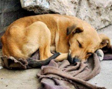 Comprar menos y adoptar más: el eslogan para el Día del Perro Sin Raza