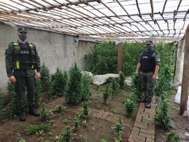 Dos detenidos con armas, drogas, pesos, dólares, elementos de precisión y plantas de Marihuana
