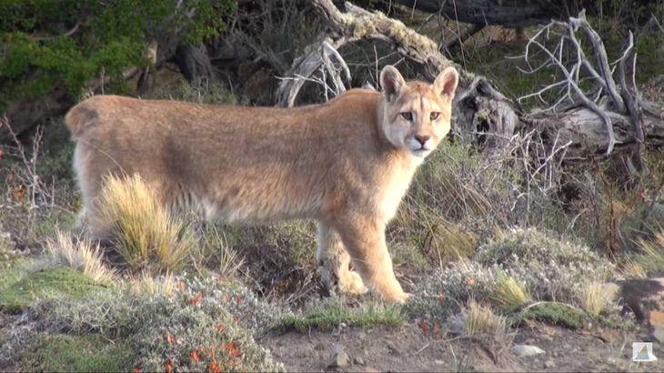 Preocupante: la Tierra perdió más del 70% de la fauna silvestre desde 1970
