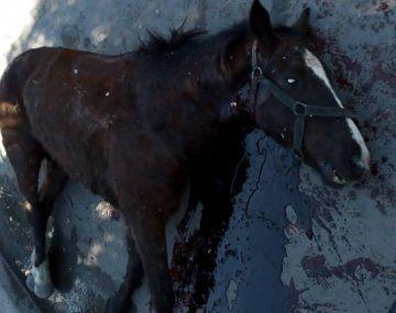 Estremecedor caso en Quilmes: un caballo usado para cartonerar chocó contra un auto y agonizó desangrado