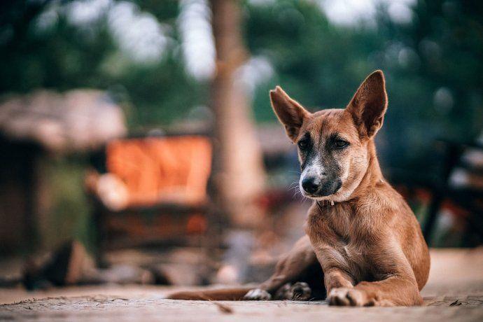 Alumnos de veterinaria crean cuchas sustentables para los perros callejeros