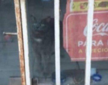 Desesperado pedido para salvar un gato encerrado en un local