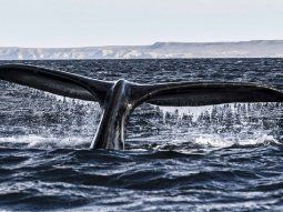 Llegaron las primeras ballenas a Península Valdés: ¿arranca la temporada turística?