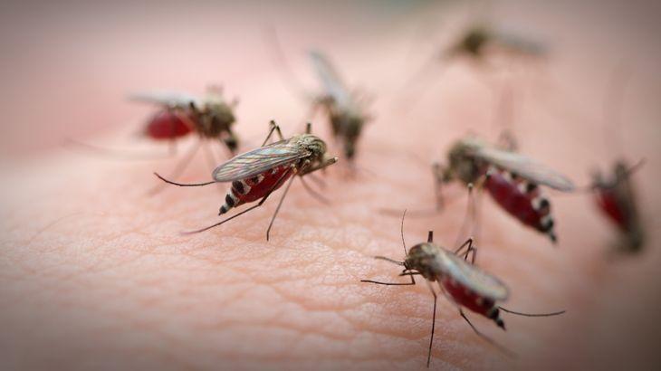 Qué pasa con los mosquitos que invaden gran parte del país