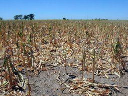 Lo que va de 2021 ya arroja que es uno de los años más secos y cálidos de las últimas 6 décadas en el país