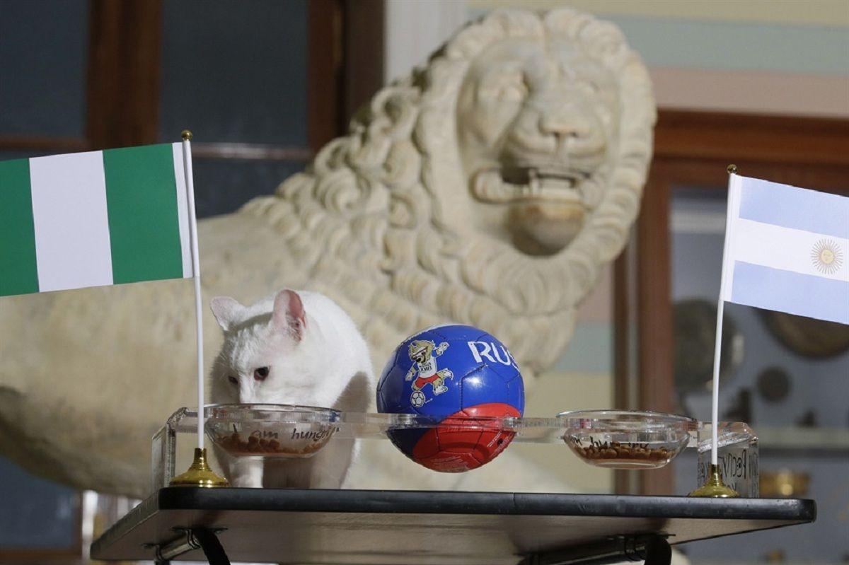 El gato Aquiles pronosticó que Argentina queda afuera del Mundial