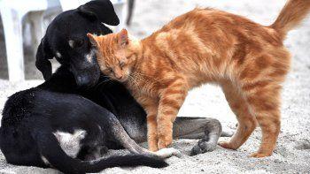 por que se celebra todos los 29 de abril el dia del animal