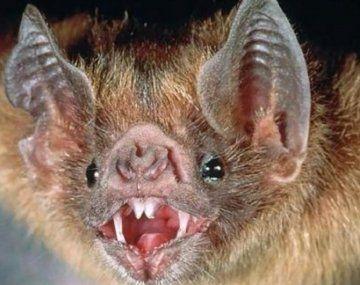 Alerta por un murciélago con rabia: vacunan a perros y gatos