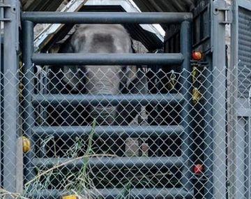 Mendoza: controlan el traslado de las elefantas en medio de denuncias por irregularidades