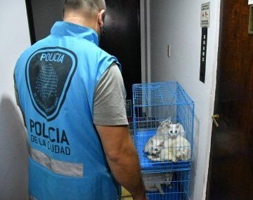 Rescataron 17 gatos y encontraron animales muertos en un departamento de Villa Crespo