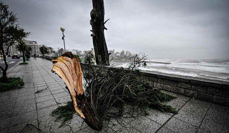 Temporal en la Costa: así quedaron Mar del Plata, Pinamar y Villa Gesell, entre otros balnearios